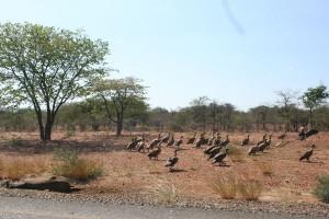 Botswana and Zim April 2014_02