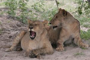 Botswana and Zim December 2014_04