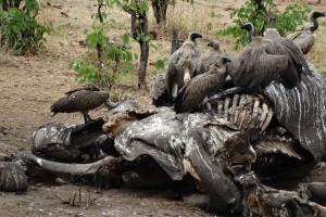 Botswana-Zim-Namibia October 2014_10
