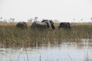 Botswana-Zim-Namibia October 2014_17